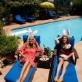 House Bunnys